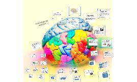 Atención, concetración, memoria e inteligencia