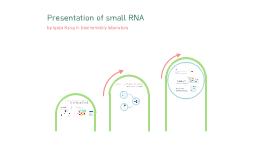 small RNA biogenesis
