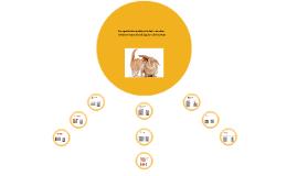 Copy of Comparación anatómica del miembro torácico del gato y del co