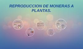 REPRODUCCION DE MONERAS A PLANTAS.