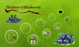 The Story of Blueberries
