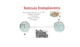 Reticulo Endoplasmico