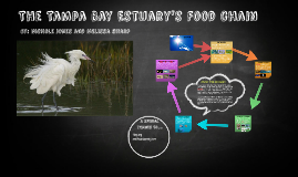 Copy of The Tampa Bay Estuary's Food Web
