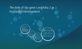 The Role of the gene Longifolia 2 in Hypocotyl Development