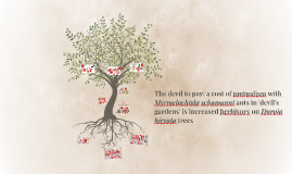 The devil to pay: a cost of mutualism with Myrmelachista sch