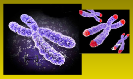 Telomerase and Epigenetics