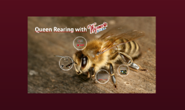 Queen Rearing with Wyman's of PEI