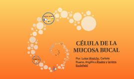 Copy of CÉLULA DE LA MUCOSA BUCAL