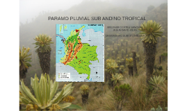 PARAMO PLUVIAL SUBALPINO TROPICAL