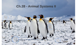 Copy of Ch.28 - Animal Systems II