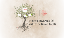 MANEJO INTEGRADO DEL CULTIVO DEL LIMON TAHITI
