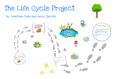 Copy of Life Cycle