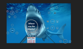 Where are the Sharks?