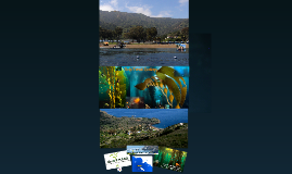 Kelp Ecology - Catalina Island