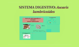 SISTEMA DIGESTIVO: ascaris lumbricoides