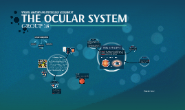 THE OCULAR SYSTEM