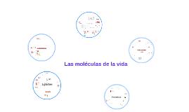 Las moléculas  orgánicas.