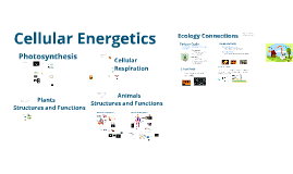 Copy of Cellular Energetics
