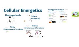 Cellular Energy - EL