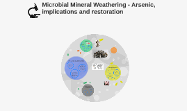 Microbial Mineral Weathering - Arsenic, implications and res