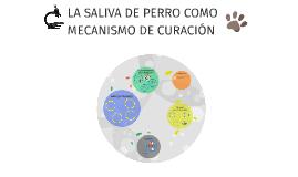 LA SALIVA DE PERRO COMO MECANISMO DE CURACIÓN