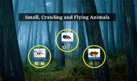 Small, Crawling and Flying Animals