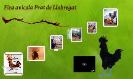 Fira avícola Prat de Llobregat