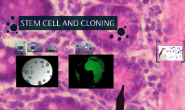 STEM CELL AND CLONING