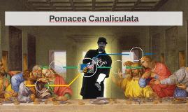 Pomacea Canaliculata