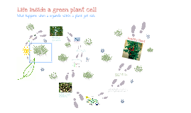Green Plant Cell