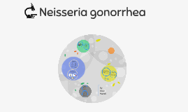 Neisseria gonorrhea