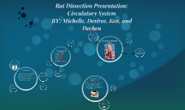 Copy of Rat Dissection Presentation: Circulatory System
