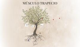 Copy of MÚSCULO TRAPECIO