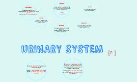Urianary System