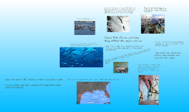 Ocean Fish Farms