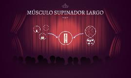 Copy of MUSCULO SUPINADOR LARGO