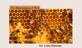 The Buzzzzzness of Bees