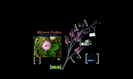 Copy of Cell Communications- Mimosa Pudica