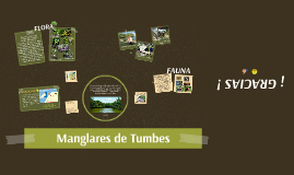 Copy of Manglares de Tumbes