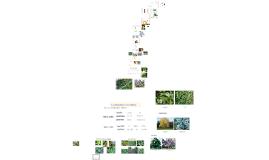 Sistema de clasificación de vegetales