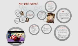New pet? Ferret?