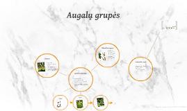 Augalų grupės