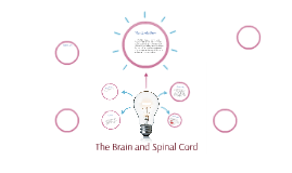 The Brain and Spinal Cord