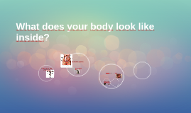 How does your body look like inside?
