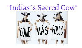 Indias´s Sacred Cow