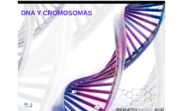 Copy of DNA Y CROMOSOMAS