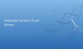 Molecular Genetics Exam Review