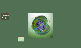 Copy of La célula