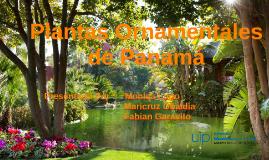 Plantas ornamentales de panama by fabian garavito on prezi for Hierbas ornamentales