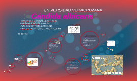 Copy of Copy of Candida Albicans